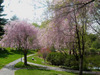 40 of 81: Mount Auburn in the Spring